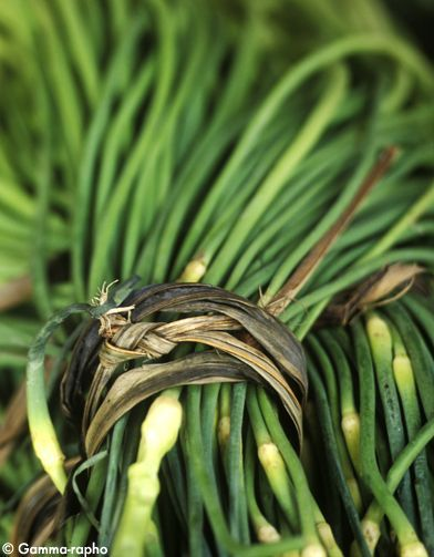 Herbes aromatiques, les nouvelles épices !