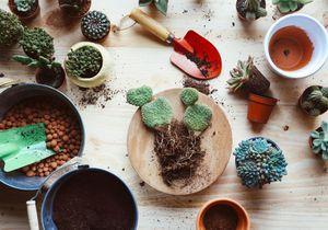 Rempoter une plante : notre guide du rempotage pour les nuls !