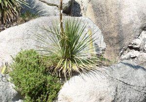 6 belles plantes exotiques qui poussent en Bretagne