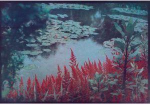 """Exposition """"Photographier les jardins de Monet, Cinq regards contemporains"""""""