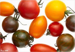 Etes-vous incollable sur la tomate ?