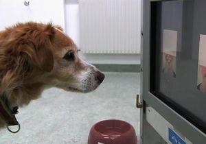 TV: ce soir, on apprend à mieux connaître les bêtes avec « Ce que ressentent les animaux »