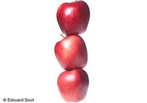 Jouez la pomme-pomme girl