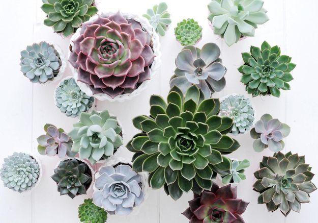 Ces 6 plantes vont survivre à la chaleur cet été