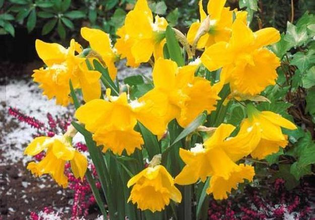 Le langage des fleurs : les originales