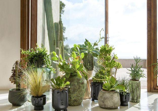 Les fans de plantes vont adorer ces comptes Instagram