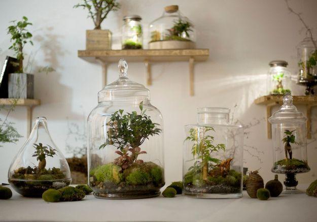 diy notre mode d emploi du terrarium elle d coration. Black Bedroom Furniture Sets. Home Design Ideas
