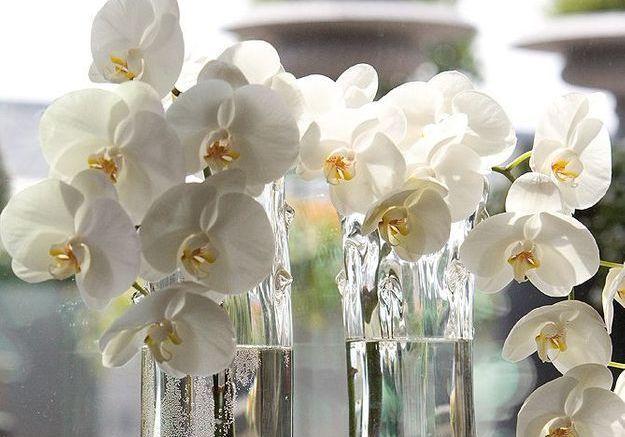 Si vous aimez l'orchidée…