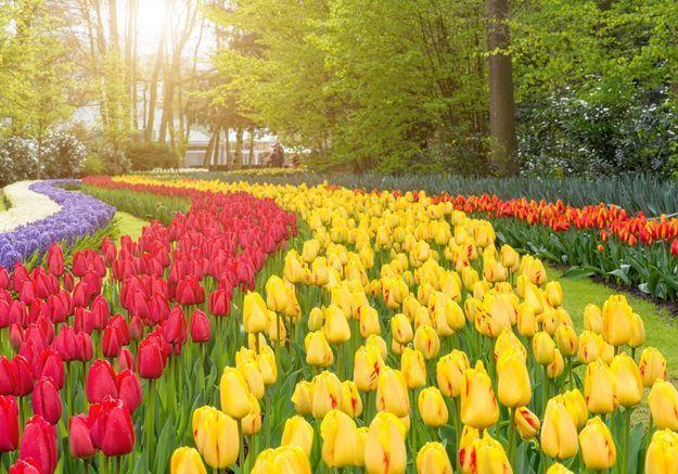 Aux Pays-Bas, on peut dormir dans un champ de tulipes (et ça nous fait rêver !)