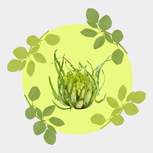 Découvrez la puntarelle, ce nouveau légume venu d'Italie