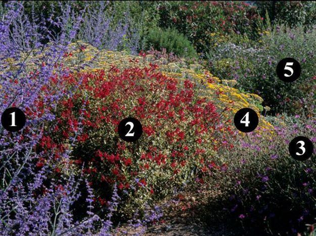 Des id es de plantes pour un jardin sec elle d coration for Plantes decoration jardin