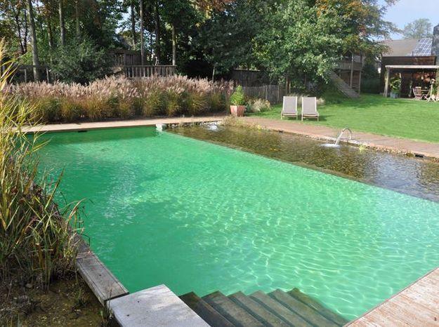 Tout savoir sur les piscines naturelles elle d coration for Reve bleu piscine
