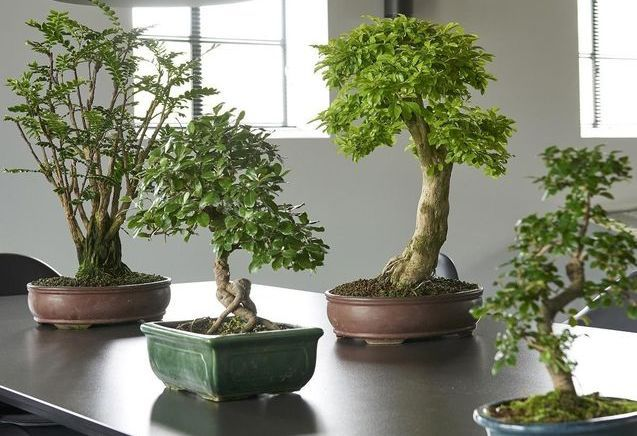 D coration de jardin elle d coration for Plantes japonaises exterieur