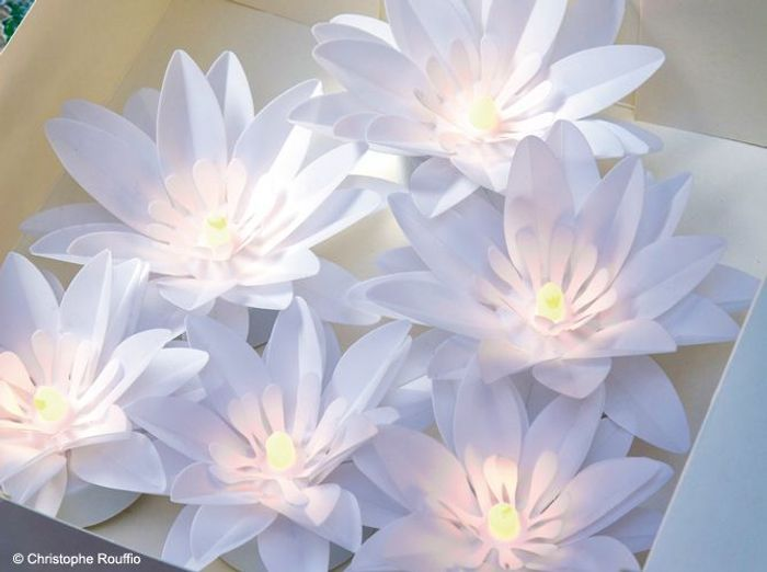 Lotus lumineux
