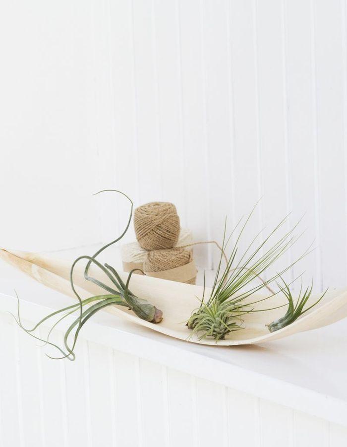 La plante idéale pour le Gémeaux : l'air plant