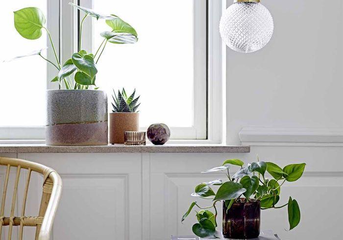 Ces 12 plantes affrontent l'hiver sans problème !