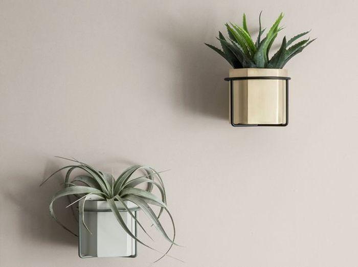 Un cactus suspendu au mur