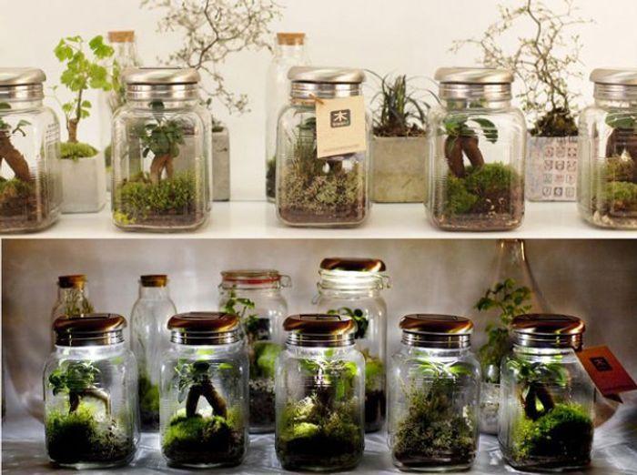 serre de jardin serre tunnel ou mini serre quelle serre choisir elle d coration. Black Bedroom Furniture Sets. Home Design Ideas