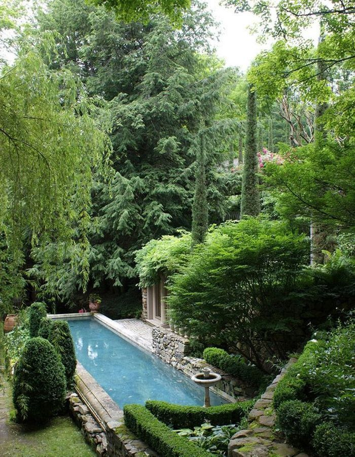 Un couloir de nage baigné de verdure