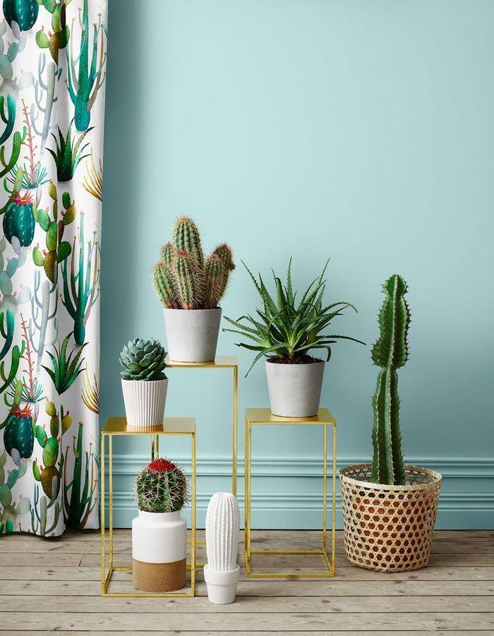 Cactus accumulés pour un effet jungle chic