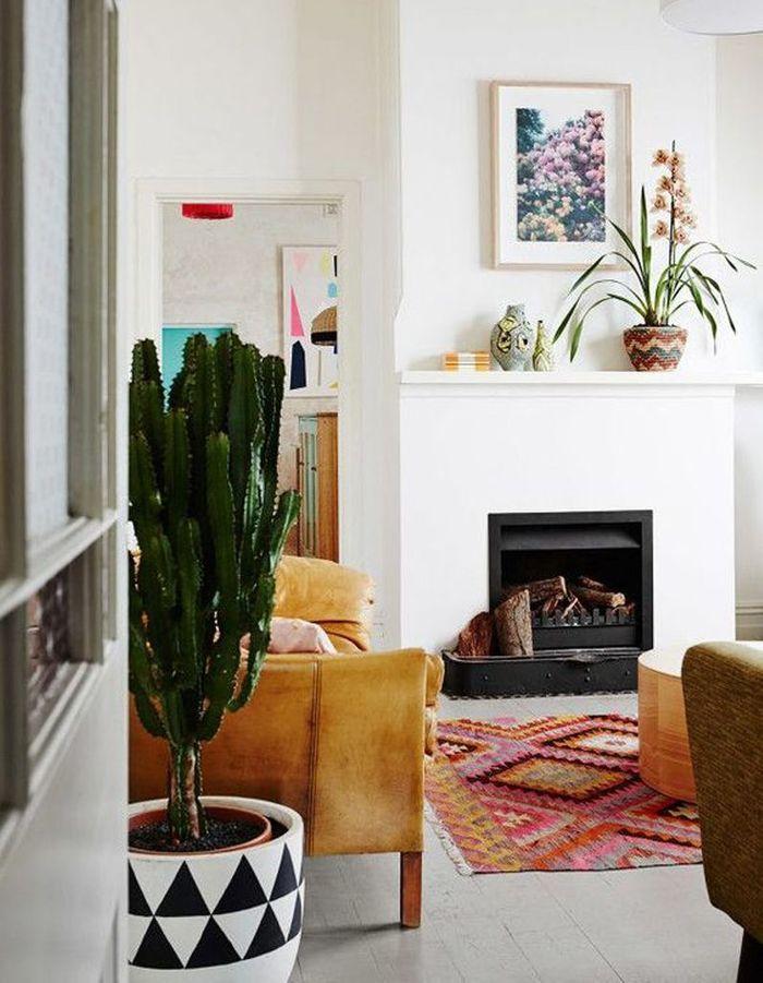 Cactus dans le salon