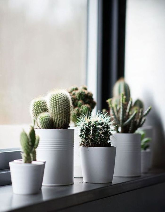 Cactus XXS accumulés sur un rebord de fenêtre