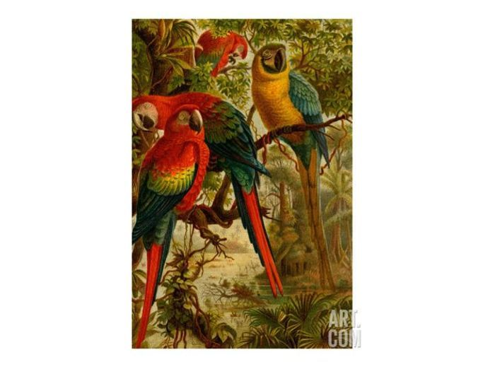 Une affiche vintage réveillée par des perroquets colorés