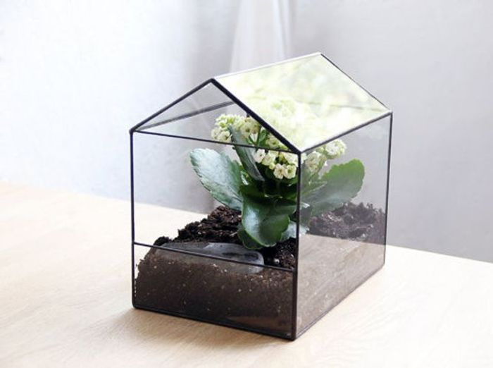 terrariums d couvrez ces mini serres ultra d co elle. Black Bedroom Furniture Sets. Home Design Ideas