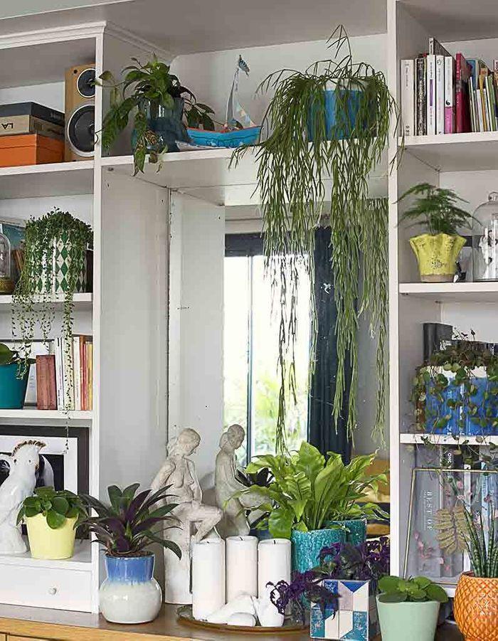 Une bibliothèque végétale