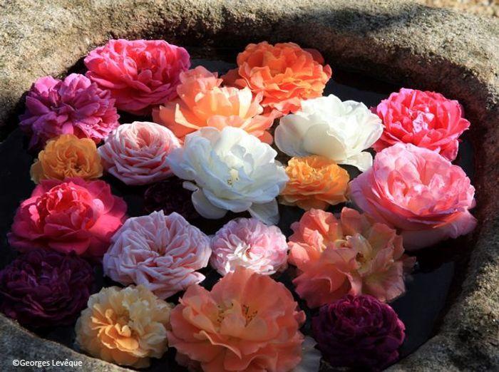 Fleurs mariage lieu fleurs flottantes