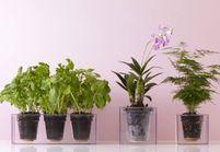 Quelle plante dépolluante est faite pour vous ?
